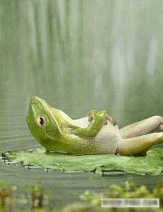 一只青蛙吃多了躺着休息