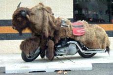 """很""""牛""""的摩托车"""