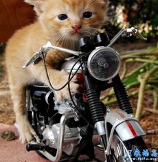 Motor de gato