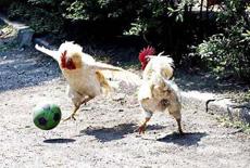 足球爱好着