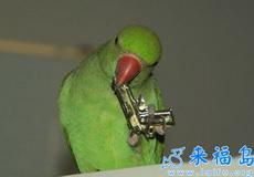 威猛的鹦鹉,是想作案吗?