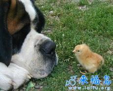 狗狗,你肿么了?
