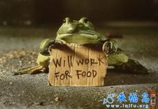 求工作、求饭菜、求包养!