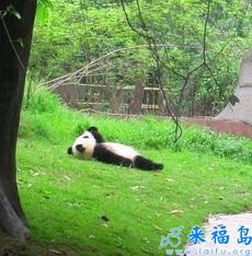 Sabes qué está pensando el panda.