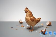 蛋殼藝術下的老母雞