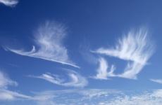 自然奇观:一群大雁向南飞