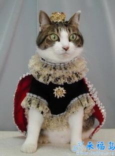 猫咪也分贵族平民