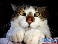 淘氣的七星瓢蟲,搞怪的貓咪