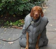 这谁家的狗啊