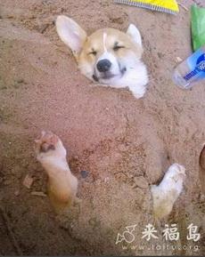 和主人去沙滩玩,被主人耍了