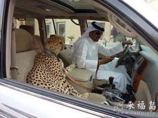 那些副驾驶座放宠物狗的都进来膜拜吧