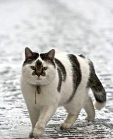 遇到一个开三菱的屌丝猫