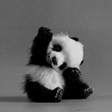 超级可爱的卖萌小熊猫