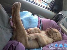 睡觉姿势好惬意啊
