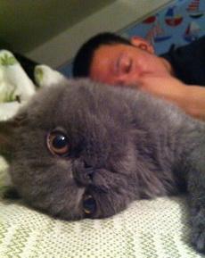 卧槽!!我家猫竟然趁我睡觉的时候拿我手机自拍!!!逆天了这是!!