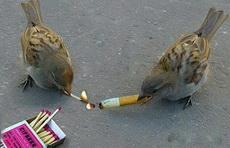两只小鸟还真能玩!