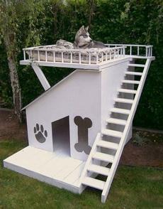 狗狗的豪华别墅