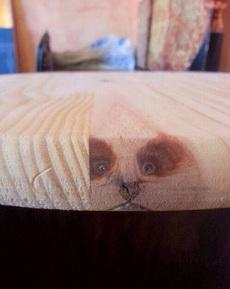 话说像不像某个大仙做法把只浣熊变成这木头或者封印在里面了?