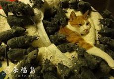 猫咪的噩梦