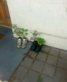 这些植物还活着吗?