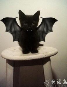我是可爱的小蝙蝠