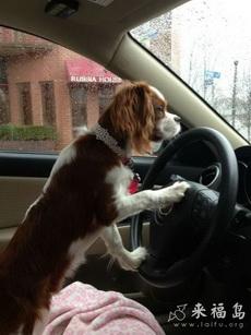 现在哪个贴吧可以开车
