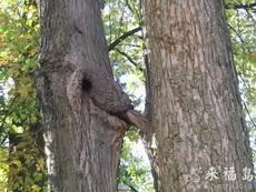 大树好邪恶啊