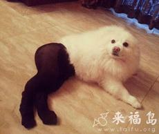 白富美,高贵,撩人,黑丝袜!丧心病狂!
