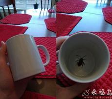 整人专用:杯底的蟑螂