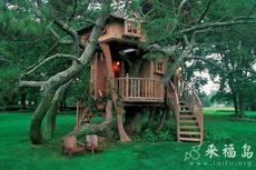 顺树而建的木屋
