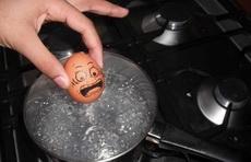鸡蛋的恐惧