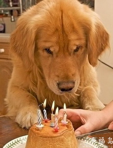 给狗狗过生日