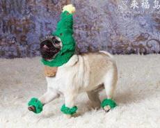 戴綠帽子的小狗