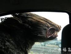 不要把头伸出车外