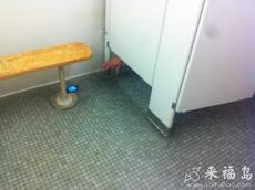 今天在卫生间外看到这么一幕