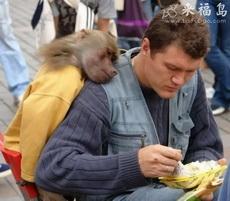 Monkey is peeking over man's shoulder.