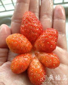 買草莓買到個奇葩,這家伙都經歷了什么?