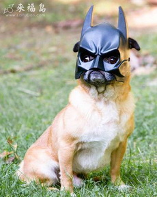 我是蝙蝠侠!