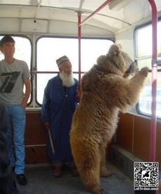 有些老外真是暴力啊,熊都怕他们