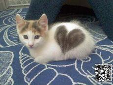 愛心小貓咪