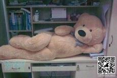 妖娆的玩具熊