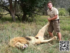 轻松制服一头狮子