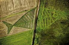 艺术家去种田也要和别人不一样