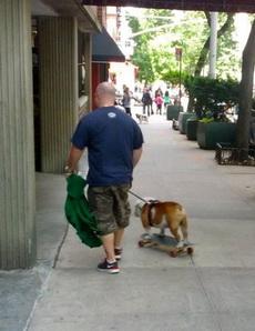 狗狗也有代步工具了!