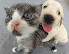 走开,不要抢我的镜头!