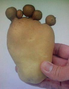 土豆大脚丫