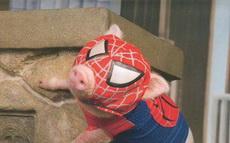 蜘蛛侠你该减肥了