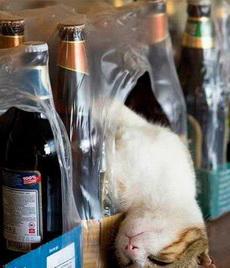 喵,不小心喝大了!