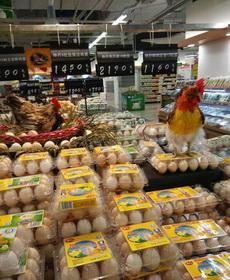 小两口不止在超市下蛋,还打算孵鸡仔