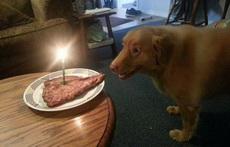 从表情看,阿汪对他的生日礼物很满意